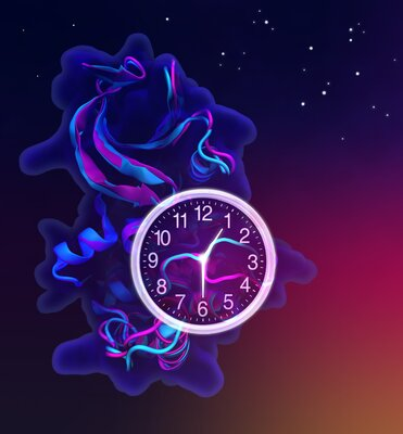 Early riser or night owl? A flip of a loop can make the difference!
